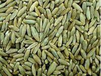 Семена ржи озимой лучших сортов на сидерат