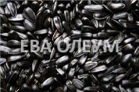 Сушка, очистка и хранение масличных и зерновых культур