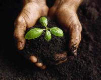 Влияние удобрений на получение высокого урожая подсолнечника