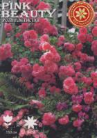 Саженцы роз Pink Beauty