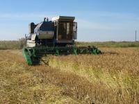 Жатка для уборки риса ЖВУ-Р
