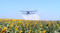Обработка полей подсолнечника с воздуха вертолетом самолетом