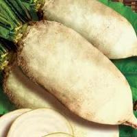 Семена свеклы кормовой Центаур оптом
