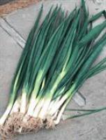 Семена лука на перо Винтер Силвер F1