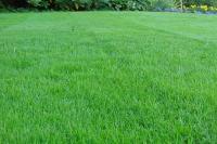 Засухоустойчивый газон