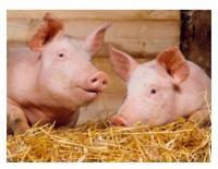 Экструдирование корма из биоотходов