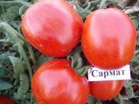 Семена томата Сармат