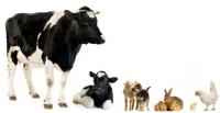 Ветеринарный препарат для КРС - Сапокорм