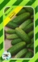 Семена огурцов Аккорд F1