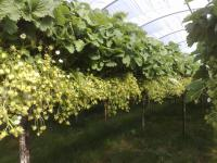 Составление бизнес-планов, бизнес-планирование процесса производства ягодных культур.