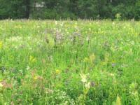 Семена кормовых трав