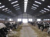 Строительство и реконструкция скотоводчесих ферм
