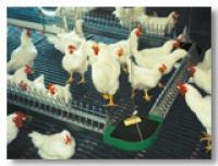 Оборудование для содержания птицы