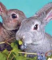 Полноценный гранулированный корм для кроликов