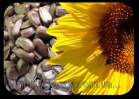 Семена подсолнечника Суперсол