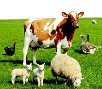 Применение сапонита в животноводстве
