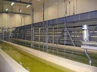 Солильные бассейны для сыра