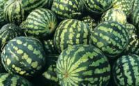 Планриз - биопрепарат для защиты растений от болезней