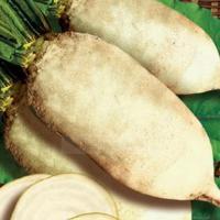 Семена кормовой свеклы Польской селекции