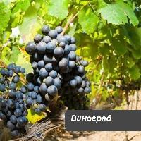 Хелатные удобрения для винограда