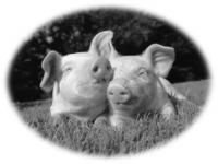Пир во время чумы или применение УФ излучения для санитарной обработки свинарников