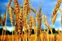 Радостим 5л, биостимулятор для обработки семян