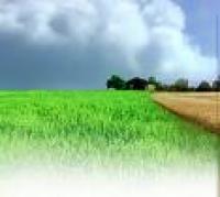 Мінеральні добрива та їх використання в сільському господарстві