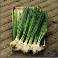Семена лука на перо Параде, Bejo, 10000 шт