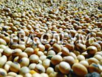 Послуги з сушки, зберігання, очищення масляних, зернових: кукурудза, соя, соняшник, рис.