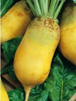 Семена свеклы кормовой Урсус от 100 кг
