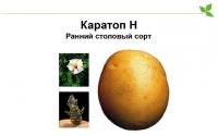 Картофель семенной Каратоп