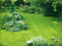 Семена травы газонной Декоративный газон