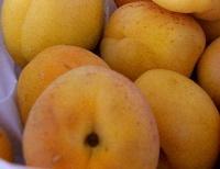 Саженцы абрикоса Киевский ароматный