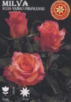 Саженцы роз Milva