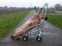 Тележка для перевозки трупов свиней