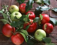«Нутрівант Плюс™ плодовий» - щедрої врожайності садів гарант