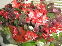 Укоренение черенков комнатных растений под заказ