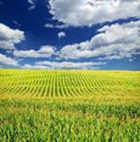 Кукуруза Пивиха, Институт зерновых культур НААН Украины