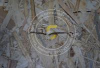 Пружина прижима нитки прямая Вельгер 61-63-71