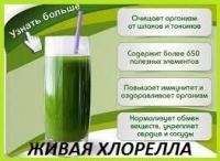 Живая хлорелла концентрат