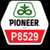 Семена кукурузы Пионер П8529, Pioneer P8529