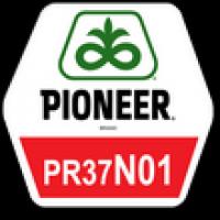 Семена кукурузы Пионер ПР37Н01, Pioneer PR37N01