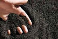 Семена CHILKAT FS-199 рапс Канадский озимый трансгенный сорт под евролайтинг элита
