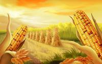 Семена кукурузы Дау Сидс ДС 0336 Dow Seeds ФАО 350