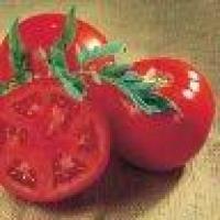 Семена томатов Санрайз F1 Seminis