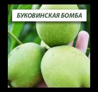 Грецкий орех Буковинская Бомба (Однолетний)