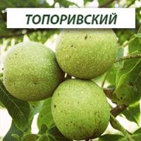 Саженцы грецкого ореха Топоривский (Двухлетний)