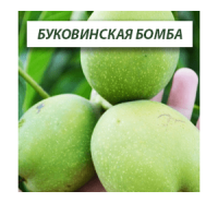 Грецкий орех Буковинская Бомба (Двухлетний)