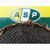 Семена подсолнечника Бенето, Мaїsadour, устойчивый к 6 (A-F) расам заразихи