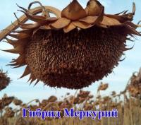Меркурий OR семена подсолнечника